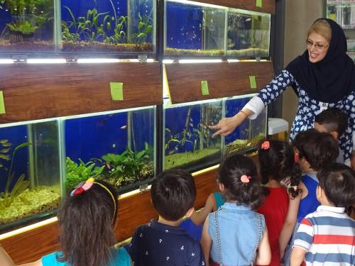 akvarium va shpazi tiiir 005