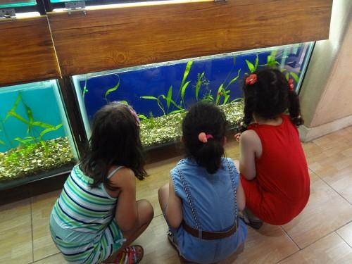 akvarium va shpazi tiiir 016