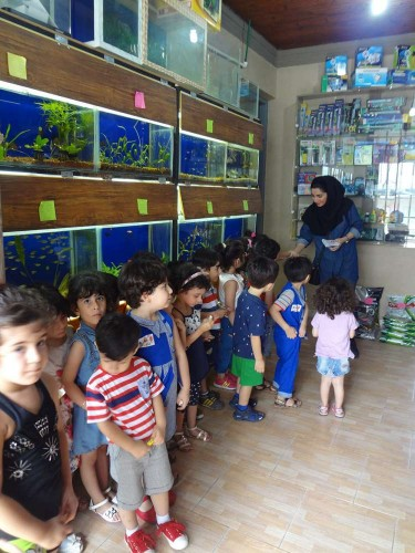 akvarium va shpazi tiiir 026