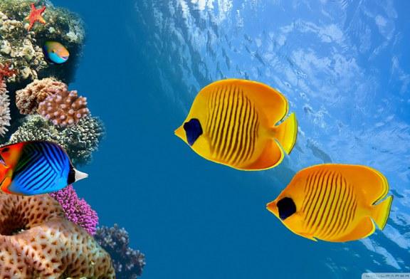 بازدید نوگلان جاویدان از آکواریوم ماهیها