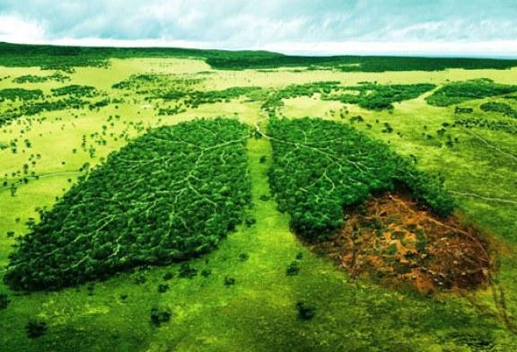 برگزاری کلاس آموزشی حفظ محیط زیست