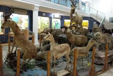 بازدید از موزه اداره کل محیط زیست
